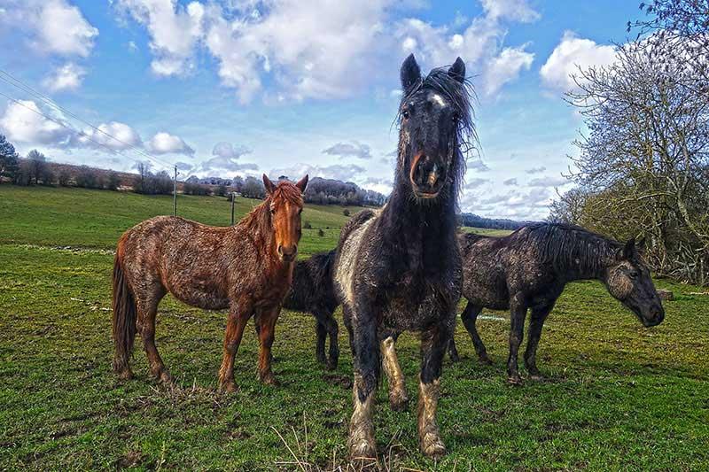 Diese Pferde erinnerten uns schon fast an Wildpferde