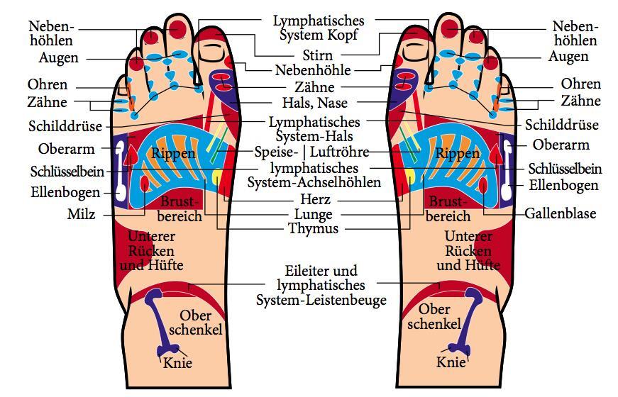 Die Fußoberseiten spiegeln vor allem unser Skelett und unsere Muskeln wieder.