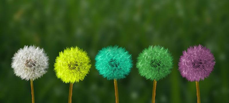 Wo Erwachsene in der Regel nur die physische Form einer Pflanze wahrnehmen sehen Kinder häufig auch noch die energetischen Körper in Form von unterschiedlichen Farben