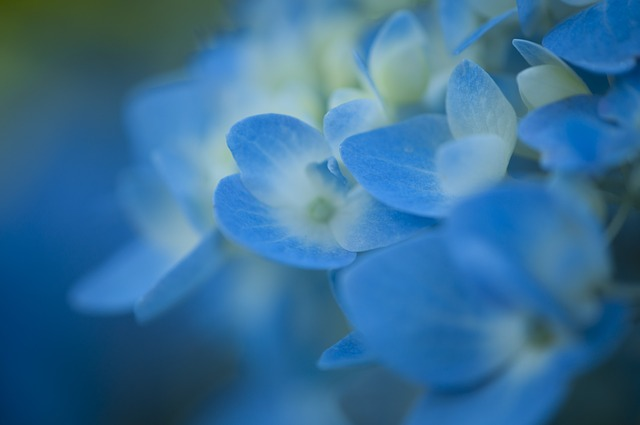 Coryceps Sinsensis ist eine von vielen wunderbaren Heilflanzen.