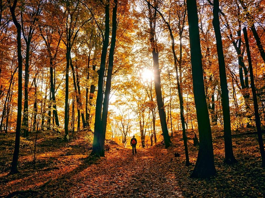 Zur Visionssuche an einem einsamen Platz im Wald.