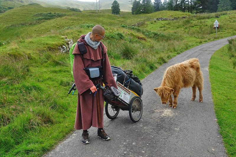 Naturliebhaber streichelt ein Galloway-Rind
