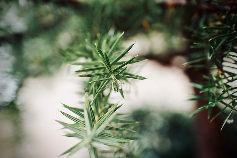 Zweige, Bäume, Tiere, Wanderer: Alle nass!