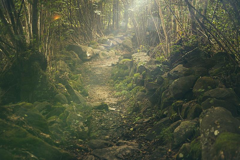 Nasser Wald in Regen und Nebel