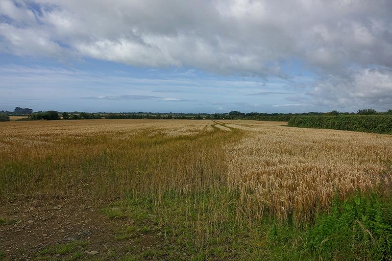 Die Landwirtschaft hat das einst grüne Paradies weitgehend zerstört.