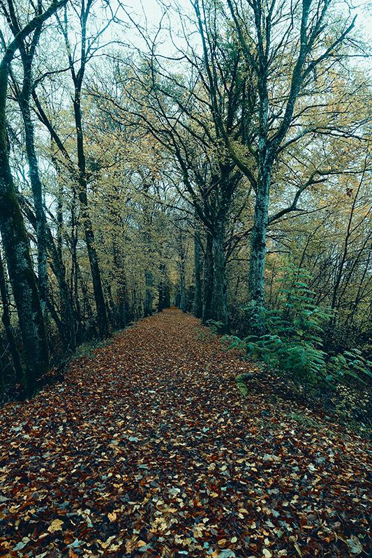 Der Herbstwald ist nun unser ständiger Begleiter.