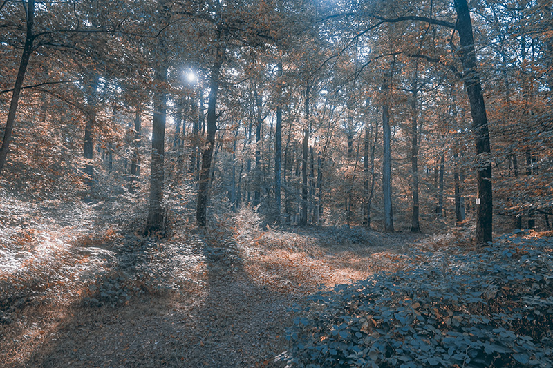 Der Herbstwald bietet viel Raum für Inspiration