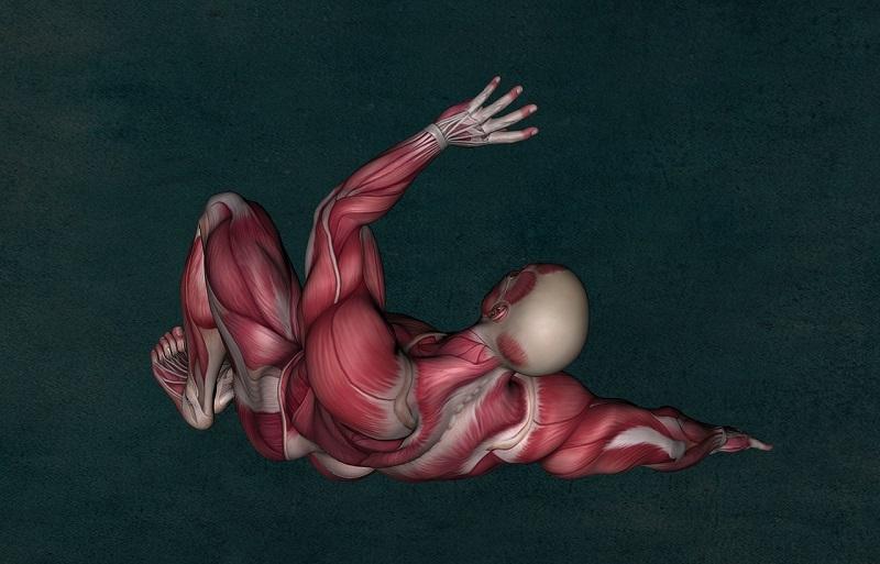 Fetteinlagerung im Muskelgewebe