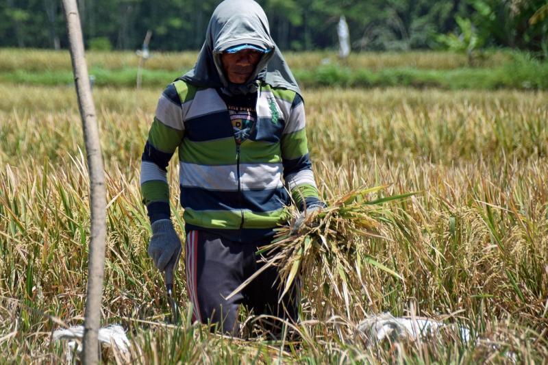Auch in Italien gehören minderbezahlte Feldarbeiter aus dem Ausland zum alltäglichen Bild
