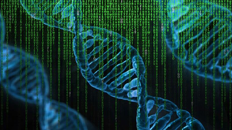 Der genetische Code des Menschen gilt als vollständig entschlüsselt Aber stimmt das wirklich