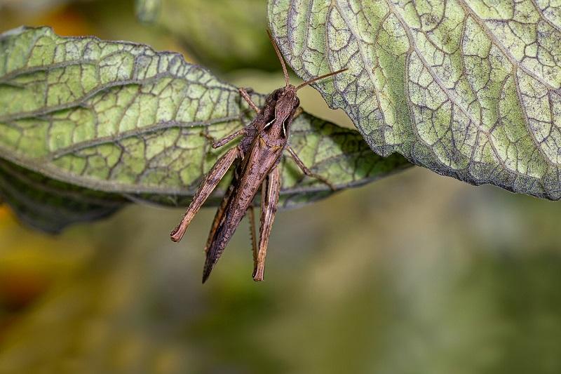 Die vielen kleinen Zikaden machen einen Heidenlärm in der Basilikata