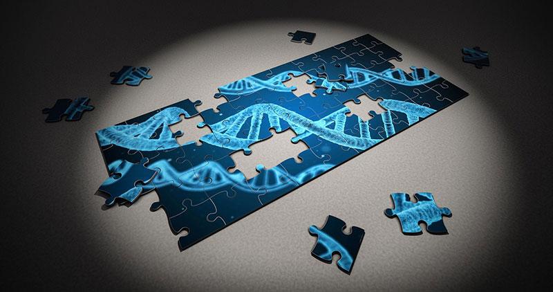 Je mehr Puzzleteile wir in der Genforschung zusammensetzen desto weniger Sinn ergibt das Bild für uns