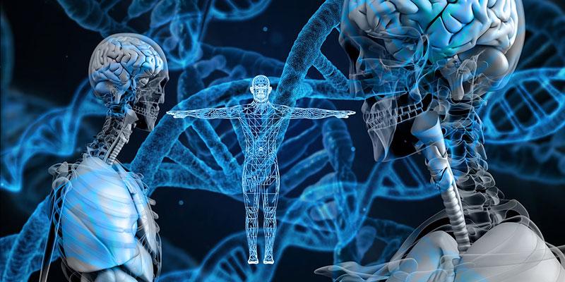 Sind wir Menschen die komplexeste Lebensform auf Erden und damit das Ende der Evolution