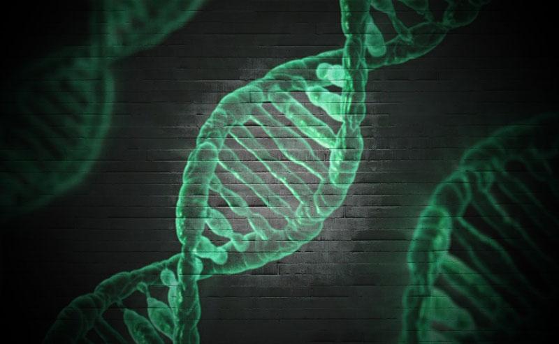 Unser Gencode ist nicht in Stein gemeißelt sondern verändert sich im Laufe unseres Lebens