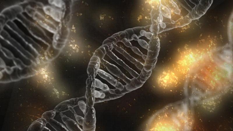Wo bleibt die angekündigte Erleuchtung durch die Entschlüsselung der Gene