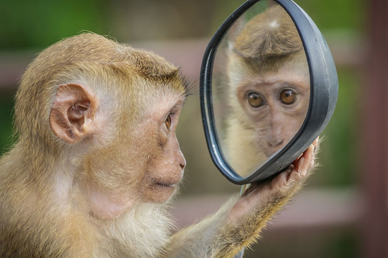 Alles im Leben ist ein Spiegel